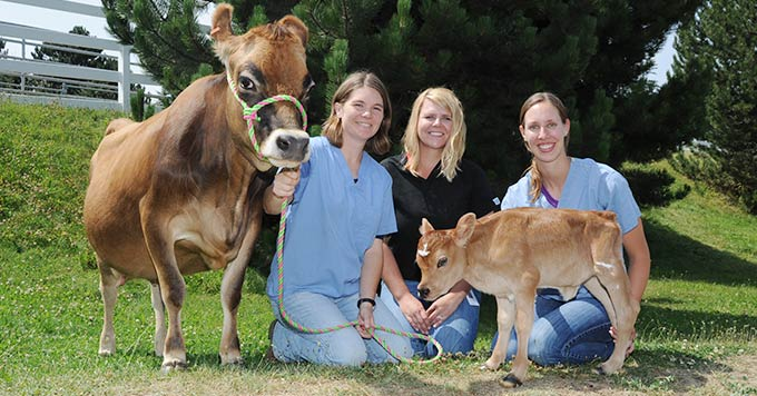Veterinary students with cows.